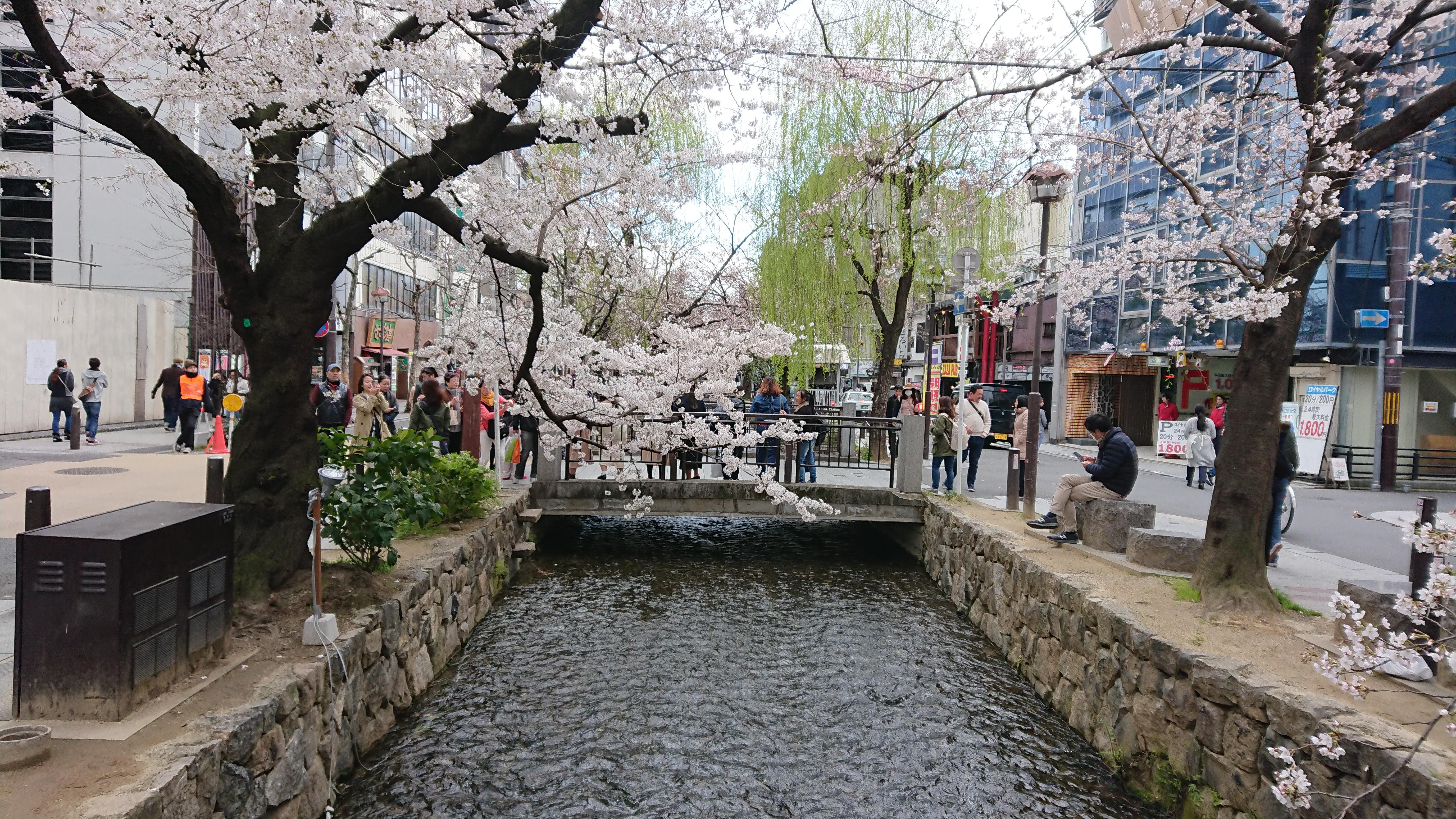 春の高瀬川